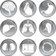 Anatomical icons (eps10) — Stock Vector