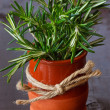 Fresh rosemary. - Stock Photo