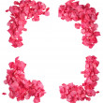 Rose Petal Frame — Stock Photo