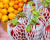 Planta para o ano novo chinês — Fotografia Stock