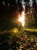 失われた森林 — ストック写真