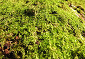 The moss — Stock Photo
