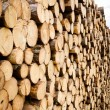 Pine timber stacked at lumber yard — Stock Photo