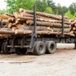Pine timber stacked on trailer at lumber yard awaiting shipment — Stock Photo