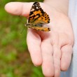 Spring concept with close up of child holding a painted lady butterfly, Vanessa cardui — Stock Photo #10143105