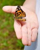 Spring concept with close up of child holding a painted lady butterfly, Vanessa cardui — Stock Photo