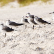 Flock of sea gulls gather at beach — Stok fotoğraf