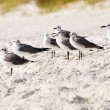 Flock of sea gulls gather at beach — Foto de Stock