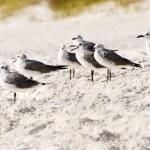 Flock of sea gulls gather at beach — Stock Photo