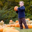 Happy young boy picking a pumpkin for Halloween — Stock Photo