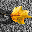 The falling leaf — Stock Photo #10045722