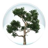 Drzewo w bańce — Zdjęcie stockowe