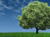 Drzewa w polu — Zdjęcie stockowe