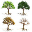Stock Photo: Seasons trees