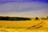 The harvester on the wheat field — Stockfoto