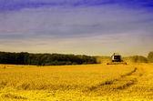 Kombajn na polu pszenicy — Zdjęcie stockowe