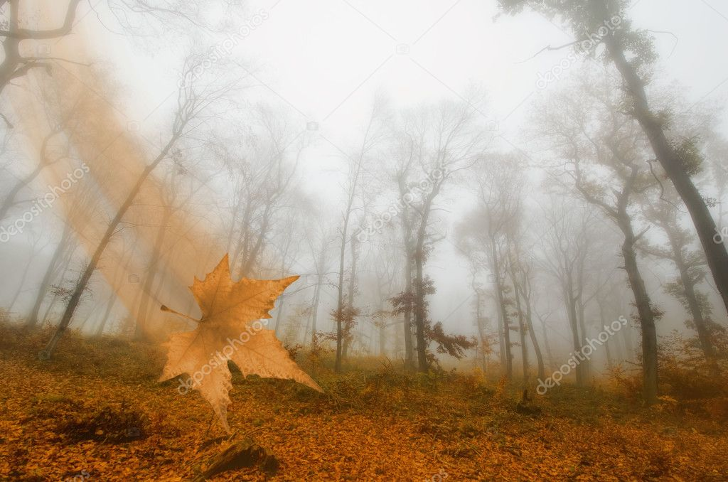 Mist in the autumn forest  Stock Photo #8425683