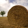The straw bale - Stock Photo