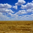 Autumn landscape. Yellow field and blue sky. — Stock Photo