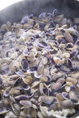 Seafood, clams — Stock Photo
