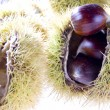 Chestnut — Stock Photo #8453067