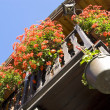 Flowers in Valle d'Aosta Italy — Stock Photo