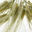 Wheat — Stock Photo #8597386