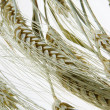 Wheat — Stock Photo #8599453