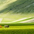 Horses on green meadow - Stock Photo