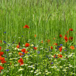 Stock Photo: Green field with flowers.
