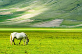 Horse on green meadow — Stock Photo