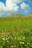 Green field with flowers. — Stock Photo
