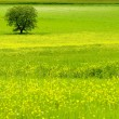 Stock Photo: Tree on green field