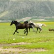 Horses running in field - Stock Photo