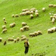 Sheep herd, Mala Fatra, Slovakia — Stock Photo #9743824