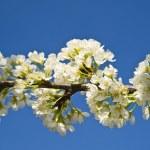 Spring — Stock Photo #9777290