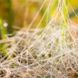 Stock Photo: Spider web in a meadow on a foggy morning.