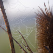 Spider web in a meadow on a foggy morning. - Stock Photo