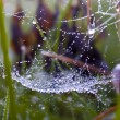 Spider web in a meadow on a foggy morning. — Stock Photo