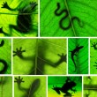 Stock Photo: Collage of amphibishadows