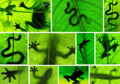Collage of amphibian shadows — Stock Photo