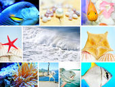 Collage of Marine life concept — Stockfoto
