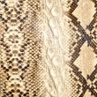 Snake skin, reptile — Stock Photo #8189940