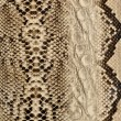 Snake skin, reptile — Stock Photo #8189963