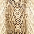 Snake skin, reptile — Stock Photo #8273677
