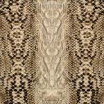 Постер, плакат: Snake skin reptile