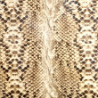 Snake skin, reptile — Stock Photo #8273685