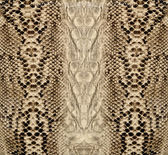 Pele de cobra, réptil — Foto Stock