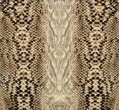Pelle di serpente, rettile — Foto Stock