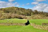 Dry stone walls surrounding pastures — Stock Photo